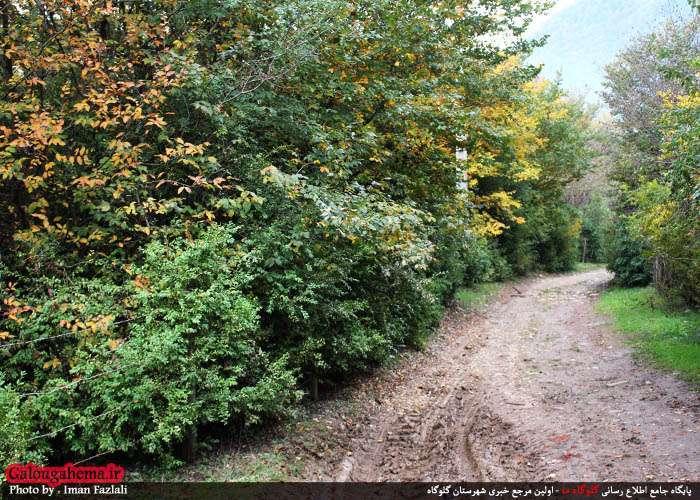 لفت با ذخیرهگاه شمشاد در مرز شرقی مازندران/تصاویر