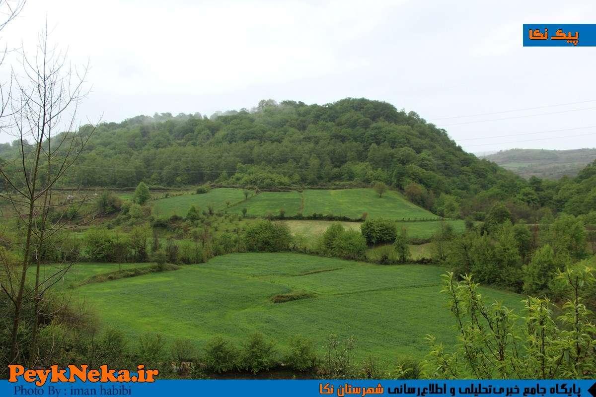 گروه قائمشهر تلگرام طبیعت زیبای روستای پرچینک قائمشهر +تصاویر