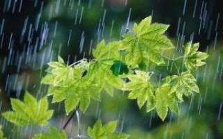 کاهش 12 درجهای دمای هوا در مازندران/ باغداران نگران نباشند