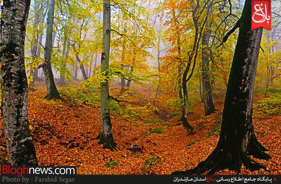 برگ ریزان پاییز در جنگلهای مازندران