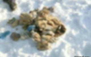 کشف جنجالی ۵۴ دست قطع شده انسان میان برف! +تصاویر