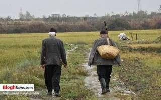 زیباییهای زندگی روستایی در منطقه کردکتی آمل