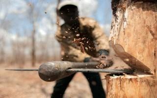 طرح تنفس به نام جنگل به کام قاچاقچیان چوب/ بازی دوسر باخت جنگل میان خریداران و دلالان