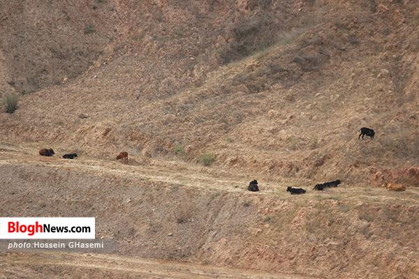 13 - مسابقه بر سر کوهخواری!/زخم ناسور بر پیکره طبیعت شمال+تصاویر
