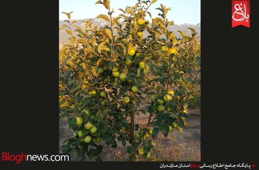 http://www.bloghnews.com/images/docs/files/000217/nf00217318-2.jpg