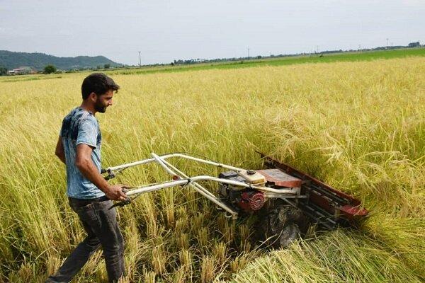 3191448 - آینده مبهم جوانان با حذف بیمه کشاورزی/دولت با سرپیچی از قانون پشت کشاورزان را خالی کرد!